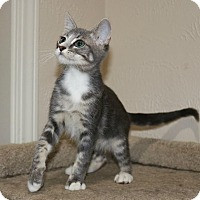 Adopt A Pet :: Fred - Edmond, OK
