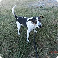 Adopt A Pet :: BOBBIE - MC KENZIE, TN