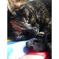 Adopt A Pet :: Arya - Cleveland, OH