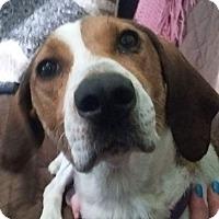 Adopt A Pet :: Pollyanna - Ogden, UT