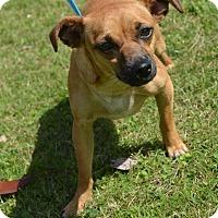 Adopt A Pet :: JERSEY - New Iberia, LA