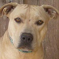 Adopt A Pet :: Karma - Rutledge, TN