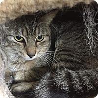 Adopt A Pet :: Bo - Waldorf, MD