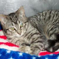 Adopt A Pet :: Clarice - Clinton, MO