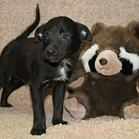 Adopt A Pet :: Chalupa - Greenwich, CT