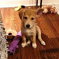 Adopt A Pet :: I'M ADOPTED Delta Dawn