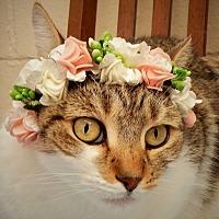 Adopt A Pet :: Camilla - Long Beach, NY