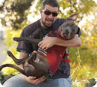 Staffordshire Bull Terrier Dog for adoption in Los Angeles, California - Earl @ shelter VIDEO!