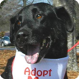 Labrador Retriever Mix Dog for adoption in McCormick, South Carolina - Bradley
