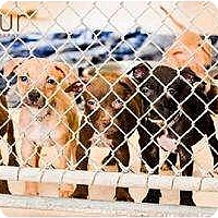 Adopt A Pet :: Foster Homes Needed - New Port Richey, FL