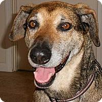 Adopt A Pet :: Jennie - Phoenix, AZ