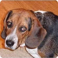 Adopt A Pet :: Timmy - Portland, OR