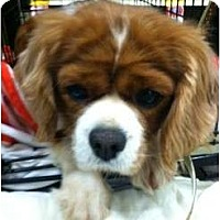Adopt A Pet :: Rosie - Ooltewah, TN