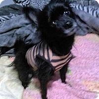 Adopt A Pet :: Bebe - Houston, TX