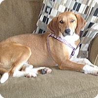 Adopt A Pet :: Sadie - Hamilton, ON