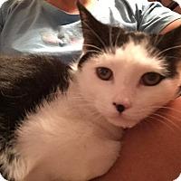 Adopt A Pet :: Batman - Raritan, NJ