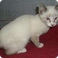 Adopt A Pet :: Sparkle - Columbus, OH