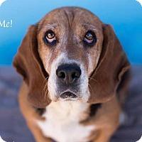 Adopt A Pet :: Cora - Acton, CA