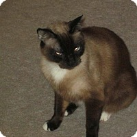 Adopt A Pet :: Nelson - Monroe, GA