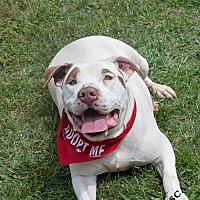 Adopt A Pet :: Rascal - Salisbury, NC