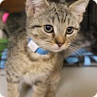 Adopt A Pet :: Ky-Mani - Medina, OH