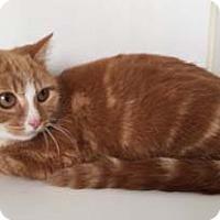 Adopt A Pet :: Blaze - Merrifield, VA