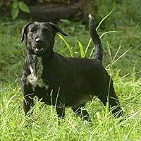 Adopt A Pet :: Capuljna - Victoria, BC