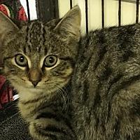 Adopt A Pet :: Creek - Bourbonnais, IL