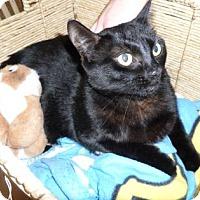 Adopt A Pet :: Ebony (Cocoa Center) - Cocoa, FL