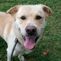 Adopt A Pet :: Bingo - Chestertown, MD