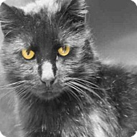 Adopt A Pet :: COLEMAN - Decatur, IL
