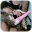 Photo 1 - American Pit Bull Terrier Puppy for adoption in Mesa, Arizona - Peanut