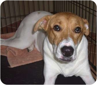 Terrier (Unknown Type, Medium) Mix Dog for adoption in Coral Springs, Florida - Zoe