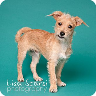 Terrier (Unknown Type, Small) Mix Dog for adoption in Tustin, California - Lucky