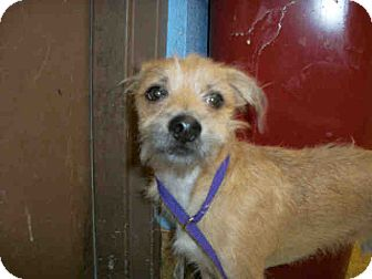 Terrier (Unknown Type, Small) Mix Dog for adoption in Las Vegas, Nevada - Jorge