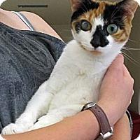 Adopt A Pet :: Spring - Riverhead, NY