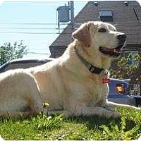 Adopt A Pet :: Blondie - Rigaud, QC