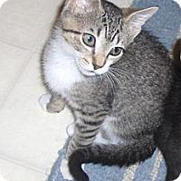 Adopt A Pet :: Crystal - Richmond, VA