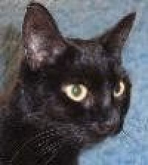 Domestic Shorthair Cat for adoption in Watsontown, Pennsylvania - Momma