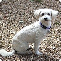 Adopt A Pet :: Daisy - MEET HER - Norwalk, CT