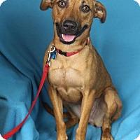 Adopt A Pet :: Tillie - Minneapolis, MN