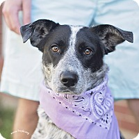 Adopt A Pet :: Gigi - Kingwood, TX
