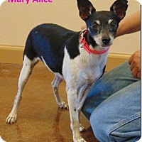 Adopt A Pet :: Mary Alice - Ocean Ridge, FL