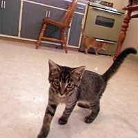Adopt A Pet :: Dorothy - Clarkson, KY