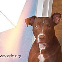 Adopt A Pet :: Frisbee - Brooksville, FL