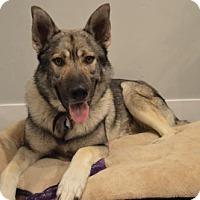 Adopt A Pet :: Wattsyn - Salt Lake City, UT