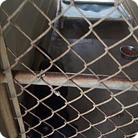 Adopt A Pet :: Sage - Marianna, FL