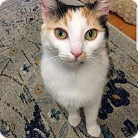 Adopt A Pet :: Galaxy - Troy, MI