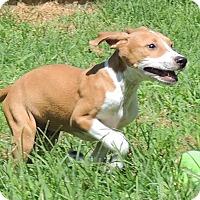Adopt A Pet :: Johnny - Joplin, MO
