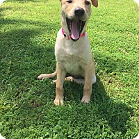 Adopt A Pet :: Lacey - Greeneville, TN